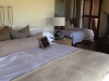 room-104-madikwe