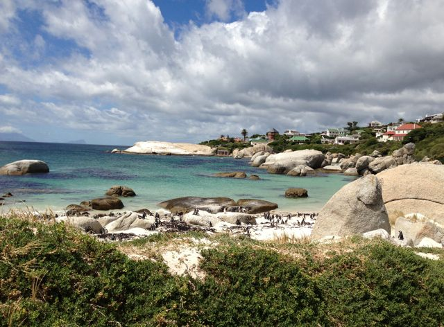 The stunning Boulders Beach.  Locals often wake up to find penguins eating breakfast in their kitchens.
