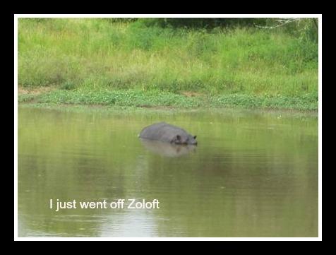 Hippo Neighbor pic