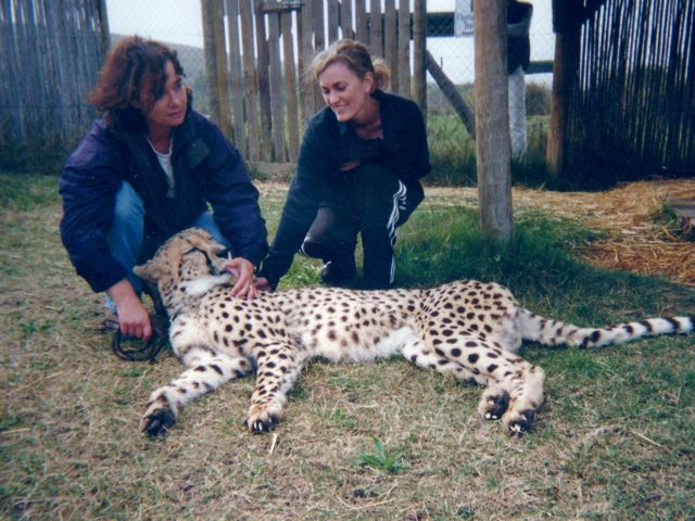 "This cheetah wanted to eat me, but I outran her.  Like ""Jackass"" don't try this at home."