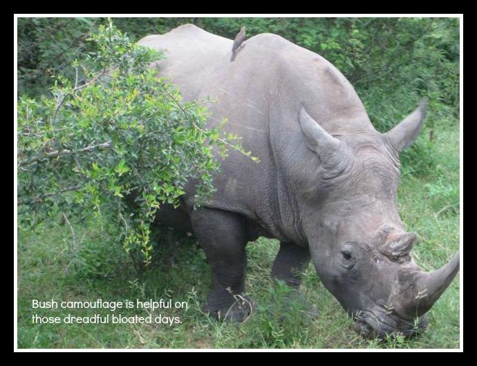 Rhino closer post pic