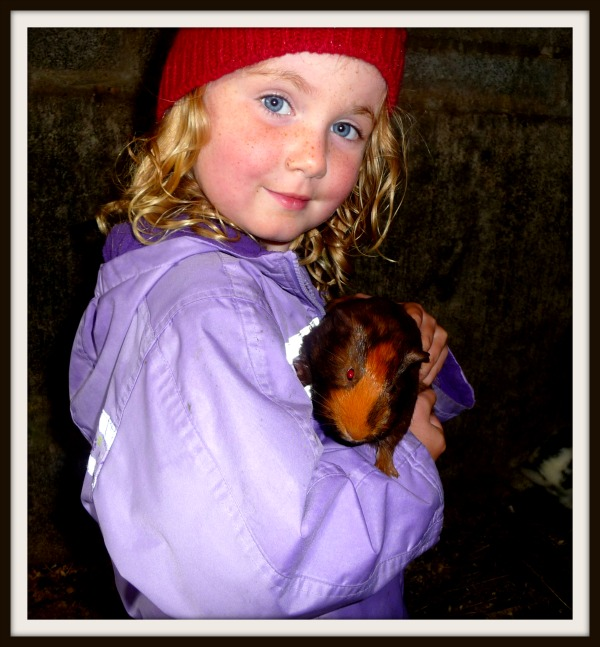 Bridget Guinea Pig