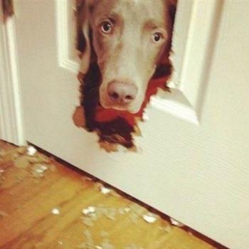 Dog In Door